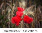 Poppies In A Corn Field