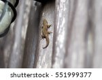 The Little Gecko On Wooden...