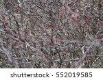barberry bush | Shutterstock . vector #552019585