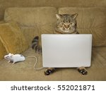 Stock photo the cat is sitting on a couch and staring at his laptop there is a computer mouse next to him 552021871