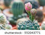The Red Flowers Of Cactus Rich.