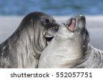 Stock photo southern elephant seal 552057751