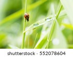 Ladybug Meets Raindrops On The...