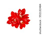 Red Flowers Isolated On White
