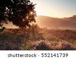 sunbeams through oak tree...   Shutterstock . vector #552141739