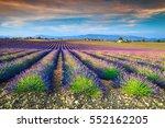 Amazing Violet Lavender Fields...