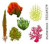 Set Of Colourful Aquatic Plant...