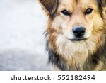 stray dog in nature | Shutterstock . vector #552182494