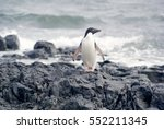 wild penguins resting by the... | Shutterstock . vector #552211345