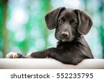Stock photo cute puppy as a model 552235795