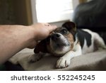 Stock photo a jack russell terrier dog being petted on a beige blanket abstract with bohkeh 552245245