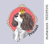 cavalier king charles spaniel... | Shutterstock .eps vector #552259141