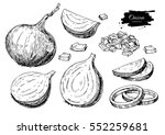 onion hand drawn vector set.... | Shutterstock .eps vector #552259681