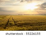 Rural Landscape At Dawn With...
