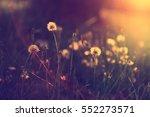 dandelion sunset | Shutterstock . vector #552273571