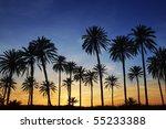 Palm Trees Sunset Golden Blue...