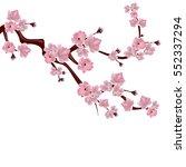 japanese cherry tree. a branch...   Shutterstock . vector #552337294