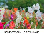 Bunch Of Colorful Gladiolus...