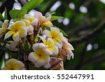 group of yellow white and pink... | Shutterstock . vector #552447991