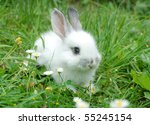Stock photo baby white rabbit in grass 55245154