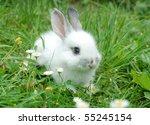 Stock photo baby white rabbit in grass 55245154