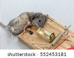 Closeup Of A Dead Mouse In A...