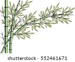 vector drawing bamboo   Shutterstock .eps vector #552461671