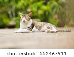 Stock photo cat 552467911