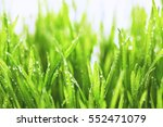 Close Up Of Fresh Thick Grass...