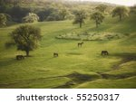 Spring Landscape With Horse An...