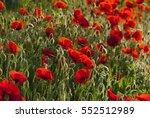 poppy field pattern background   Shutterstock . vector #552512989