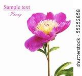 peony | Shutterstock . vector #55252858