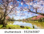 Landscape Of Cherry Blossom...