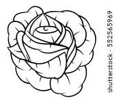 flower rose. isolated on white... | Shutterstock .eps vector #552565969