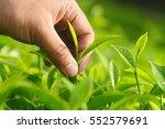 close up of man hand picking... | Shutterstock . vector #552579691