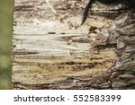 wooden texture. background of... | Shutterstock . vector #552583399