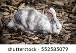 white rabbit looking for food | Shutterstock . vector #552585079