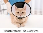 Cat In Cone Of Shame Lying On...
