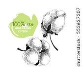hand drawn set of cotton... | Shutterstock . vector #552637207