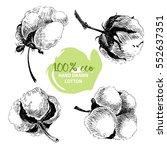 hand drawn set of cotton... | Shutterstock . vector #552637351