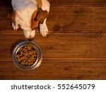 pet eating food. dog eats food... | Shutterstock . vector #552645079