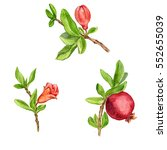 pomegranate tree branches with...   Shutterstock . vector #552655039