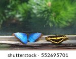 butterflies on window | Shutterstock . vector #552695701