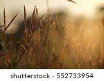 soft focus on grass flower with ... | Shutterstock . vector #552733954