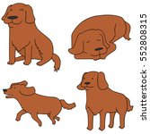 vector set of dog  golden... | Shutterstock .eps vector #552808315