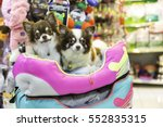 Stock photo chihuahua dog in pet store 552835315