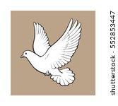 free flying white dove  sketch... | Shutterstock .eps vector #552853447