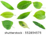 collection green leave isolated ... | Shutterstock . vector #552854575