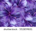Lily Flowers.  Bright Purple...