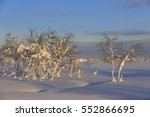 snow covered birches  betula ... | Shutterstock . vector #552866695